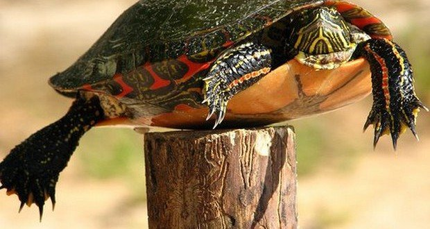 turtle-on-a-fence-post-620x330