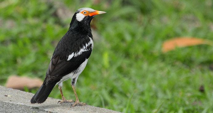 Bagaimana Mengatasi Burung Jalak Suren Yang Diam Hewan Peliharaan Dictio Community
