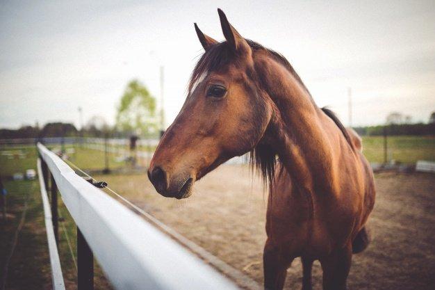 horse-head-close-up_1162-182