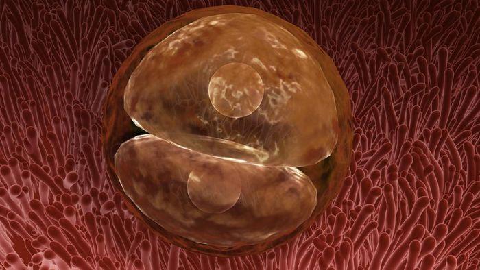 pertumbuhan bayi didalam kandungan