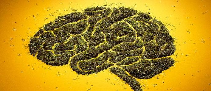 pusat imbalan otak