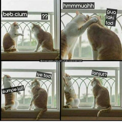 Unduh 100+  Gambar Kucing Humor Terlihat Keren