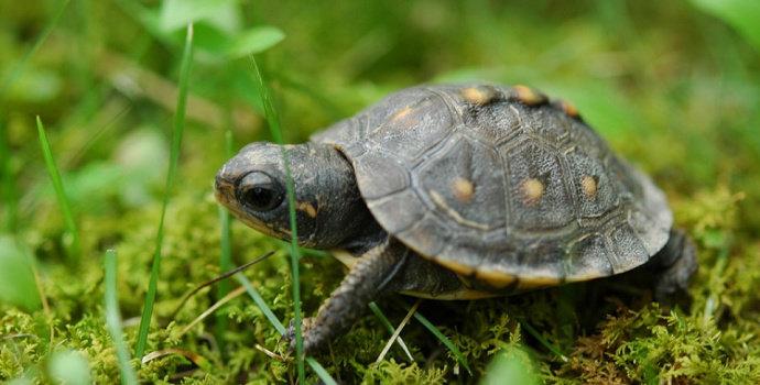 Bayi kura-kura