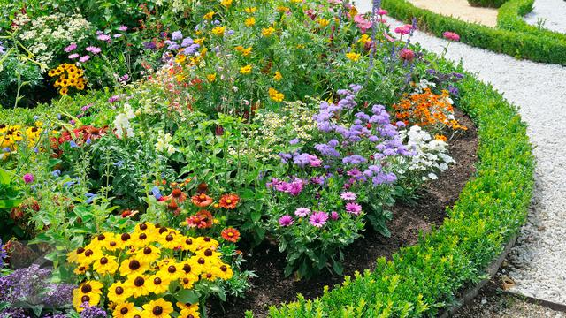 Apa Saja Jenis Tanaman Hias Yang Tahan Terhadap Sinar Panas Matahari Taman Dictio Community