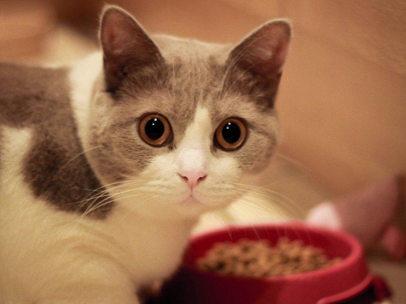 78 Gambar Makanan Hewan Kucing Terbaru
