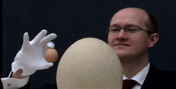 Telur Terbesar dan Telur Terkecil