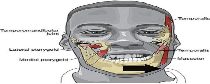 Gerakan utama mandibula