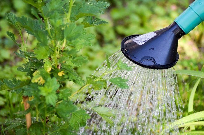 kebutuhan air optimum