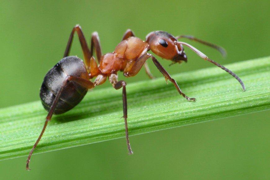 ants-870x580