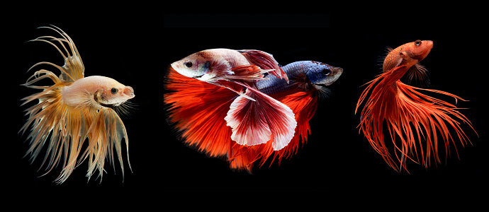 Kumpulan gambar untuk Belajar mewarnai: Warna Gambar Ikan ...
