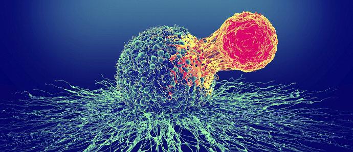 Sistem kekebalan atau sistem imun