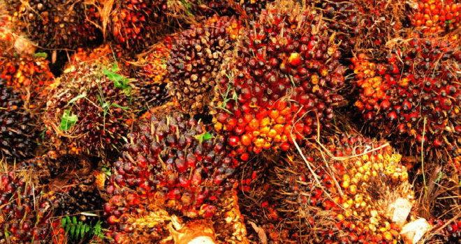 Pentingnya Industri Kelapa Sawit bagi Indonesia