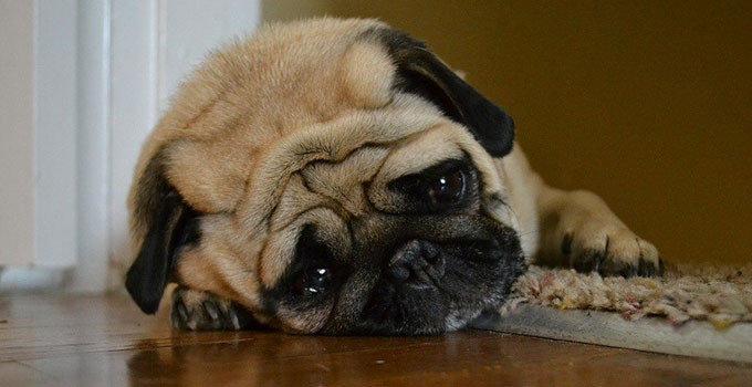 44++ Anjing sedih terbaru