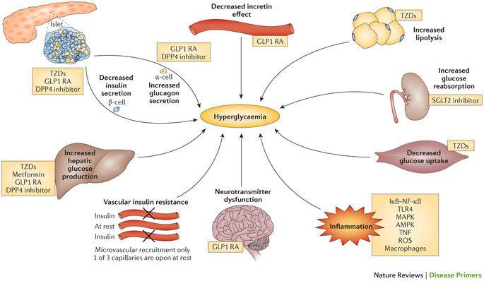 belgyógyászati hipertónia hogyan tudja legyőzni a magas vérnyomást maga