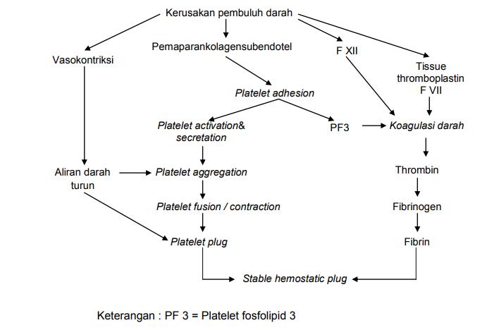 Apakah yang dimaksud dengan hemostatis ilmu kedokteran dictio imageg708x468 426 kb ccuart Images