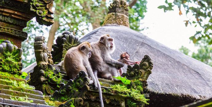 tips liburan yang banyak monyet