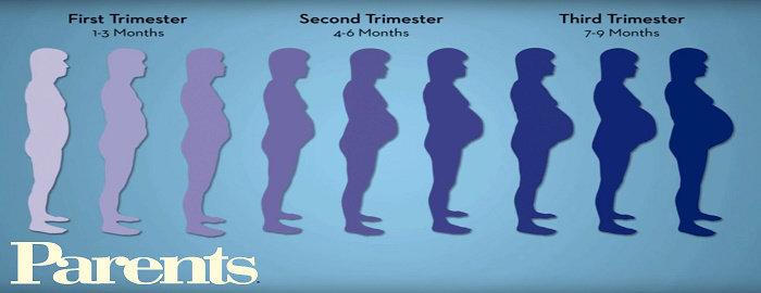 perubahan fisik pada ibu hamil