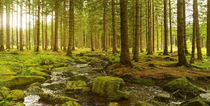 kondisi hutan
