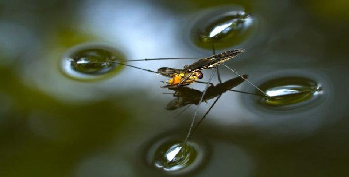 serangga air