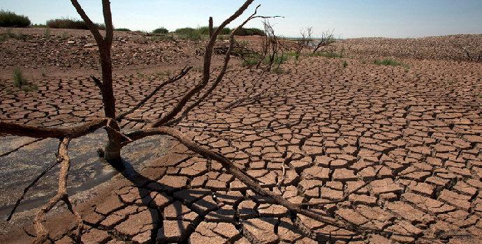 dampak kerusakan flora dan fauna