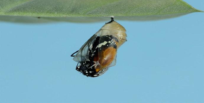 Kupu-kupu yang Lumpuh