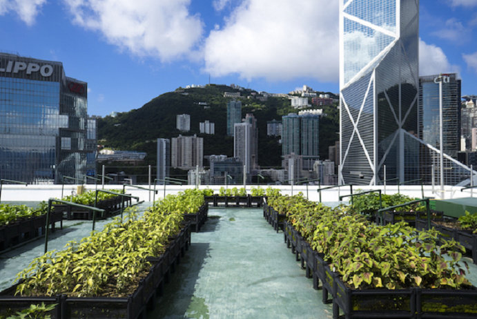 Rooftop Urban Farming 3