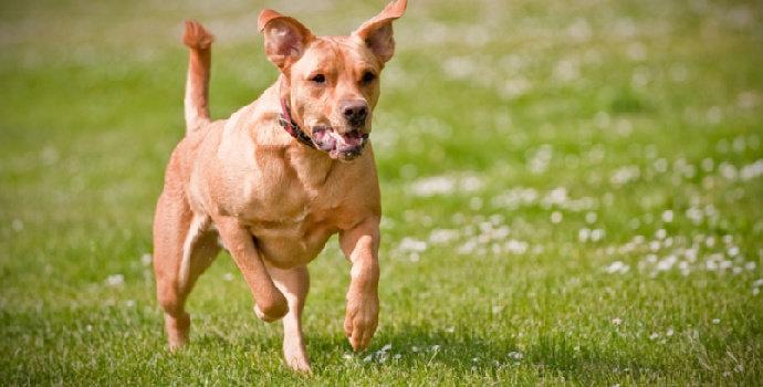 Apa saja kebiasaan baik dan buruk pada anjing ?
