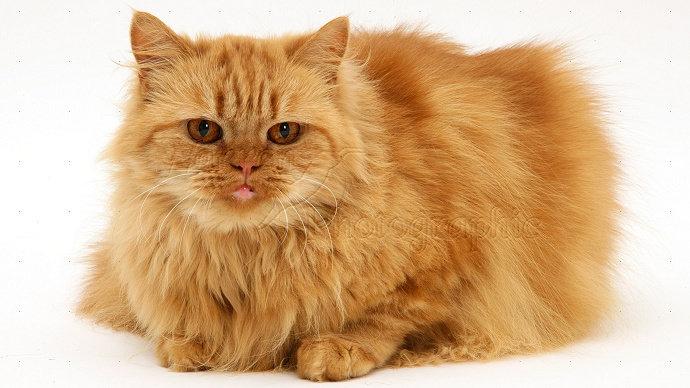 Download 78+  Gambar Kucing Yang Bagus Paling Bagus HD