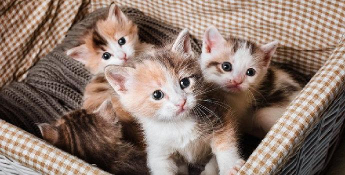 Bagaimana cara membuat kucing menjadi penurut ?