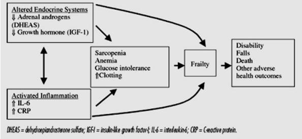 Gambar 2. Patofisiologi dari frailty syndrome. Sumber: Espinoza dan Fried.