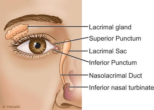 Anatomi mata dan saluran ekskretoir airmata