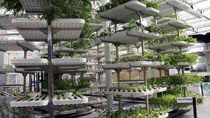 Vertical Garden Hidroponik 1