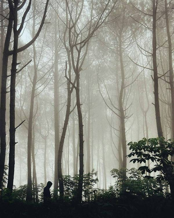 Hutan pinus tumpak pare