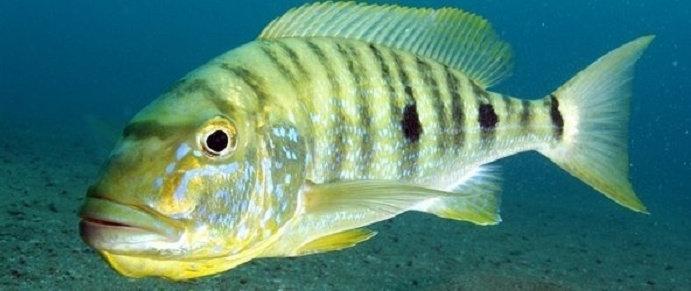Download 6200 Gambar Ikan Hias Predator Terpopuler