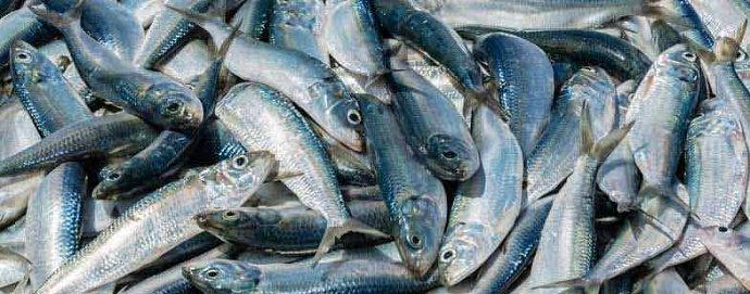 ikan yang mengandung formalin