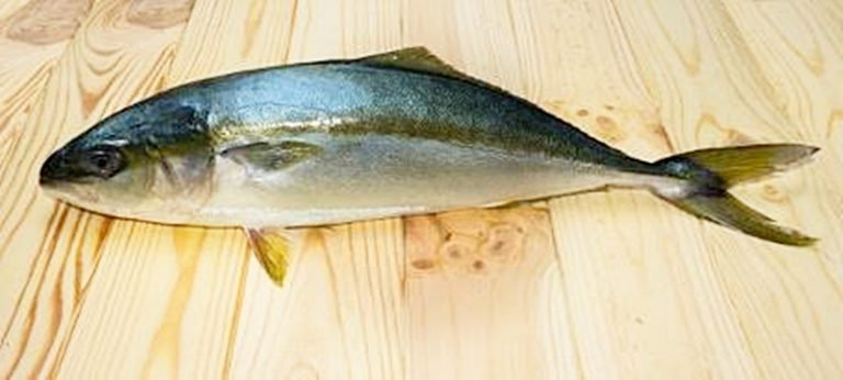 Ikan Ciling-Ciling
