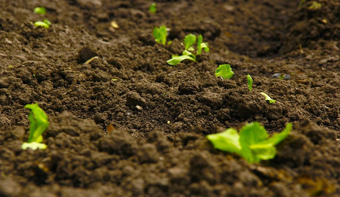 Tanah Lapisan Atas atau topsoil