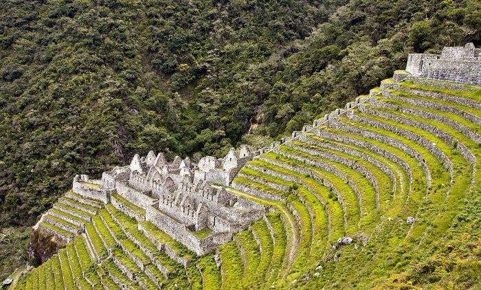 Urban Farming suku Inca 1