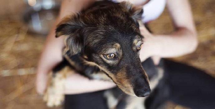 Apa saja ciri fisik anjing yang perlu diperhatikan sebelum dipelihara ?