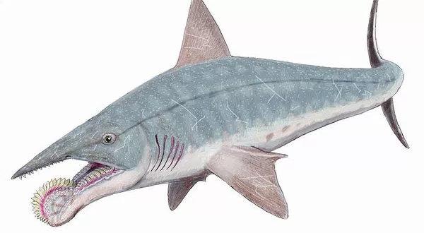 Ikan Hiu Helicaprion
