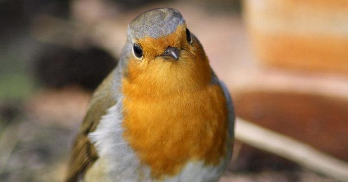 Apa Saja Makanan Burung Kenari Agar Cepat Gacor Hewan Peliharaan Dictio Community