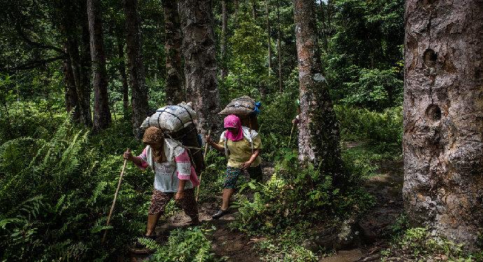 Apa yang dimaksud Asia Forest Partnership?