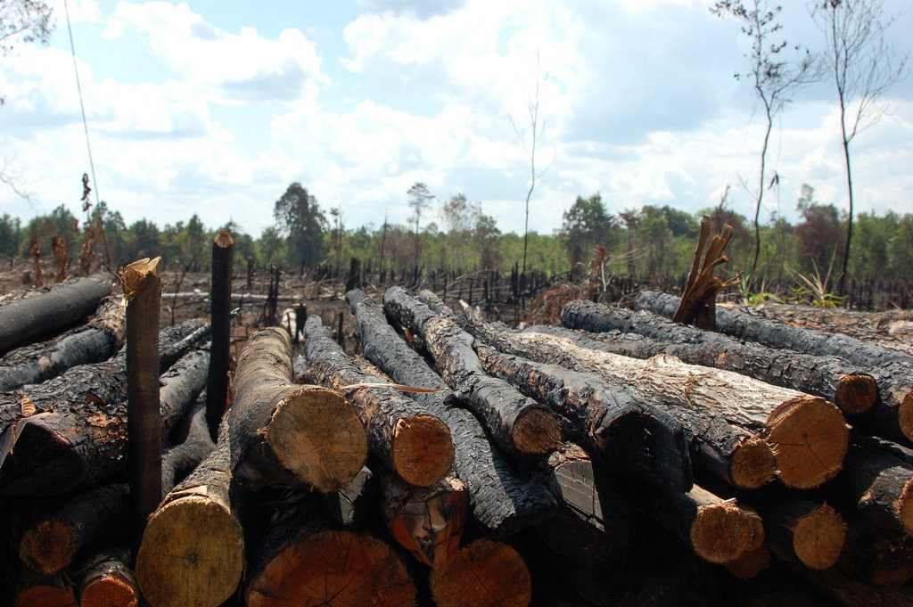 Bagaimana dampak penebangan hutan secara liar? - Diskusi ...