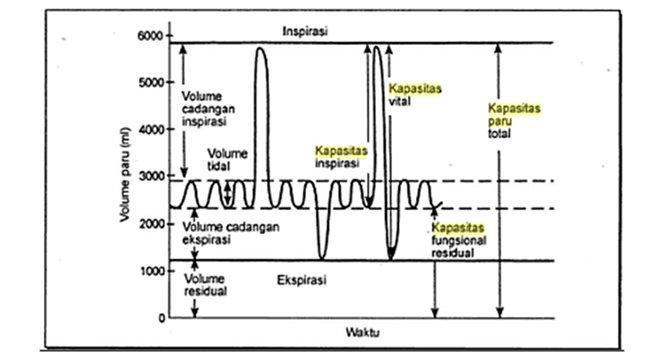 Grafik volume udara pernafasan pada manusia