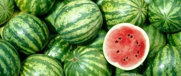 panduan-budidaya-semangka-pupuk-organik-nasa-natural-nusantara-distributor-resmi-nasa-produk-nasa-poc-nasa-hormonik-supernasa-power-nutrition