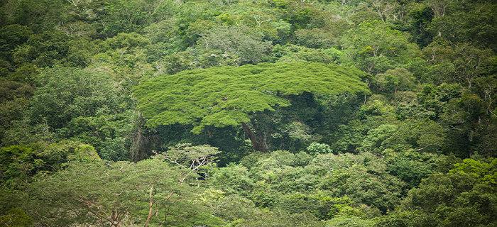 Hutan konservasi