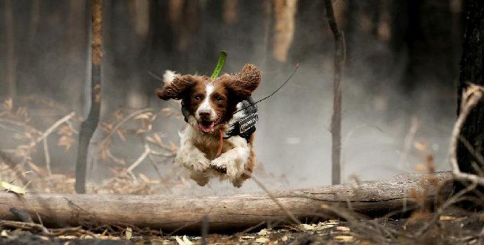 Apa saja jenis pertolongan pertama pada anjing ?