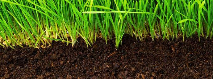Lengas tanah atau kelembaban tanah