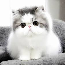 Mengapa Kucing Tidak Terengah Engah Seperti Anjing Hewan Peliharaan Dictio Community