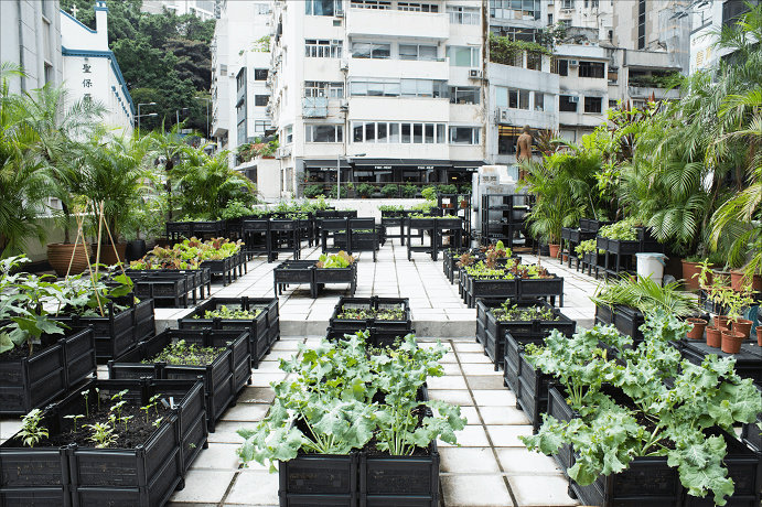 Rooftop Urban Farming 2